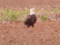 eagle-sb_-road_
